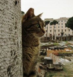 Cats in Largo Argentina