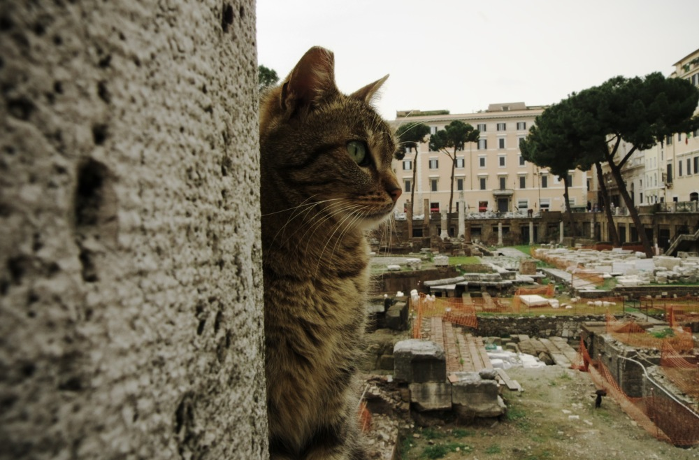 cat sanctuary rome travel through italy